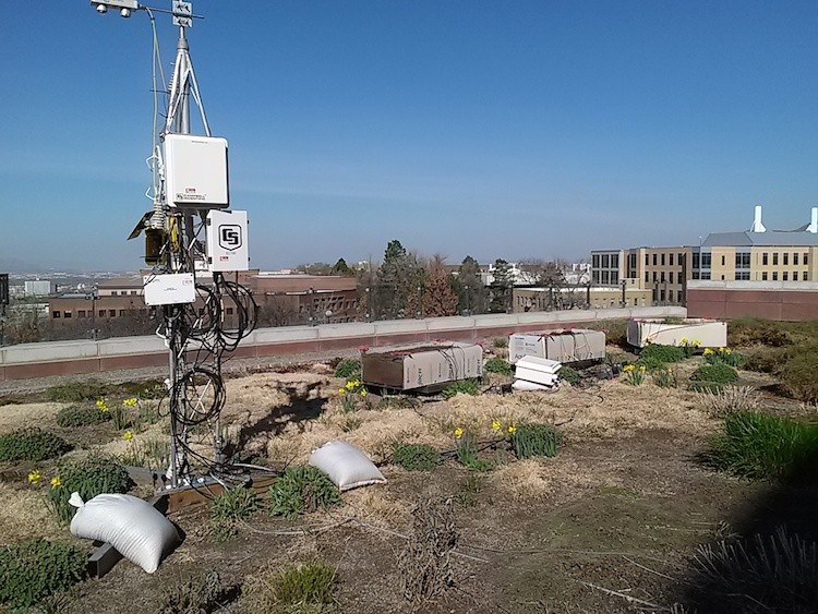 Lysimeters and weather station located on library rooftop garden - student research project