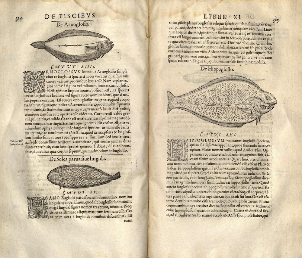 Evolution Of Darwin Marriott Library The University Of