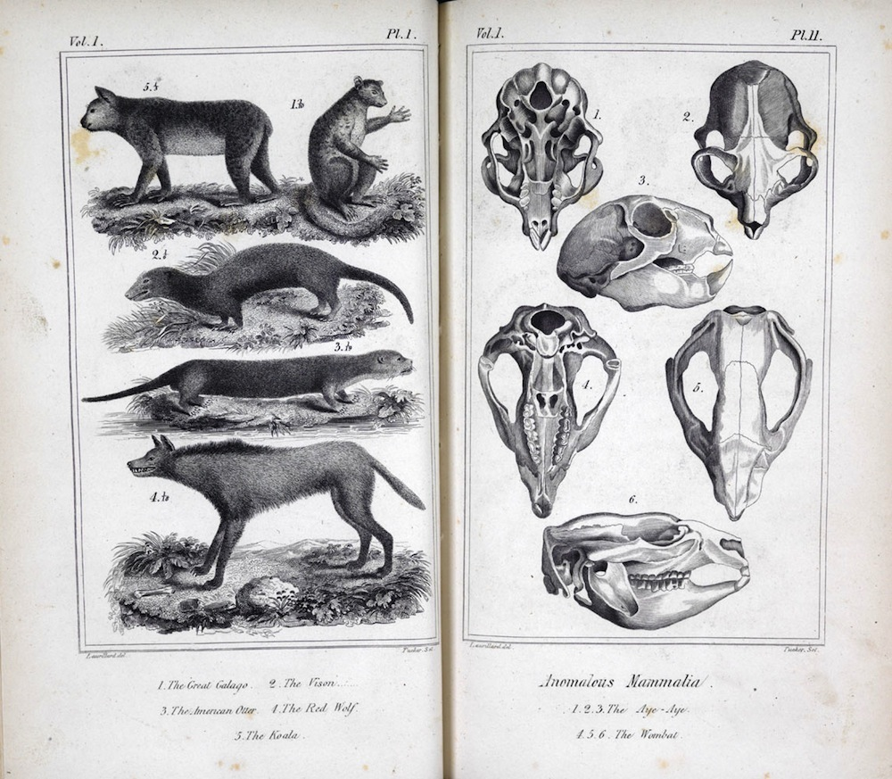 The Animal Kingdom, 1831
