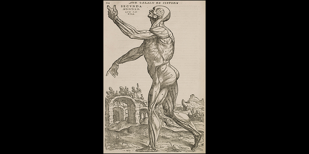 Second Muscle Man p. 214 in 1555 edition