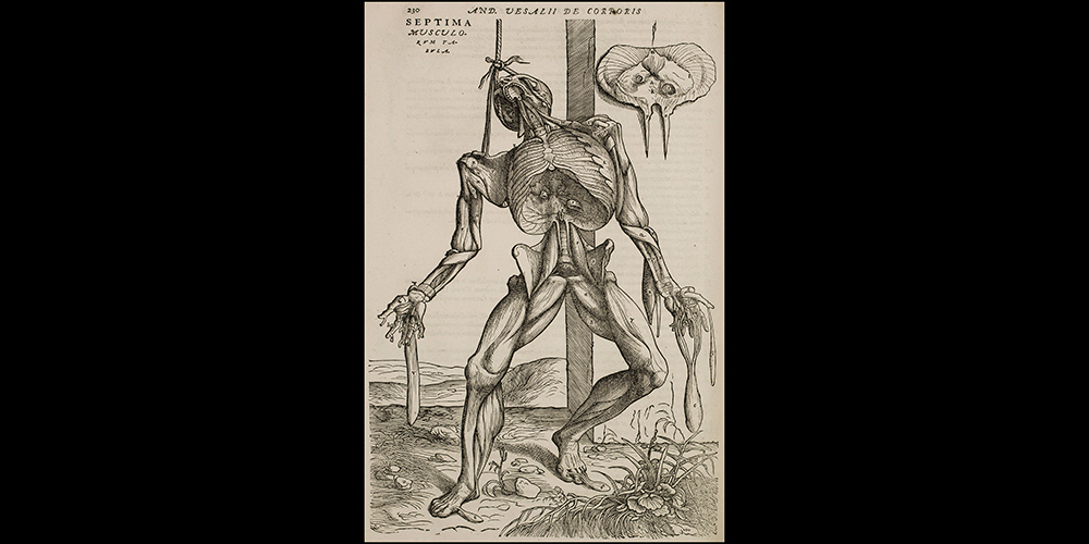 The skeleton with mouth open: Book 2, Table 7 p. 230 in 1555 edition
